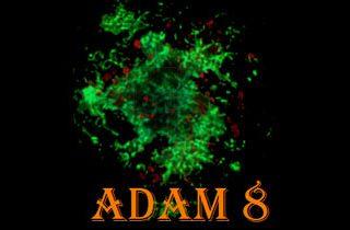 8th Scandinavian Conference, Amyloid Diseases and Amyloid Mechanisms (ADAM 8)
