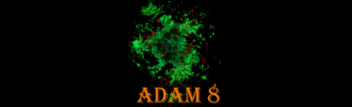 8th Scandinavian Conference, Amyloid Diseases and Amyloid Mechanisms (ADAM 8)