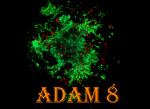 ADAM8 Amyloid Diseases Conference