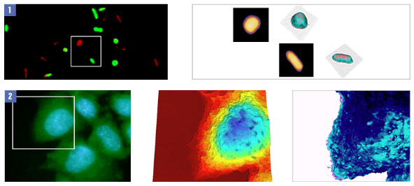 JPK BioMAT example images