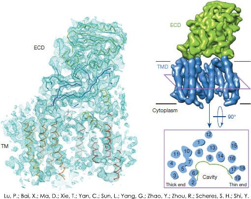 Cryo-EM example: human γ-secretase