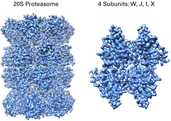 Cryo-EM Proteasome