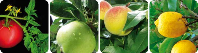 Trace analysis in fruit, vegetables and plant materials