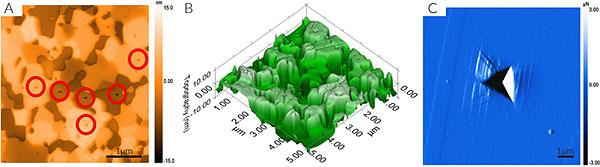 In Situ SMP Imaging Examples