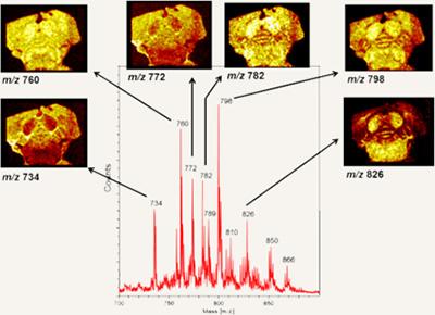 PHI NanoTOF cluster source ion gun