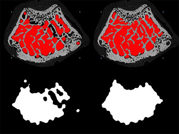 Mous femur micro-CT