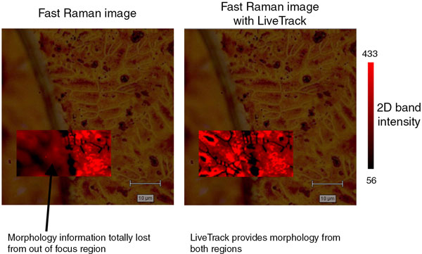 Raman image with morphology