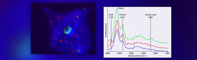 Submicron Chemical Analysis of Biological Samples