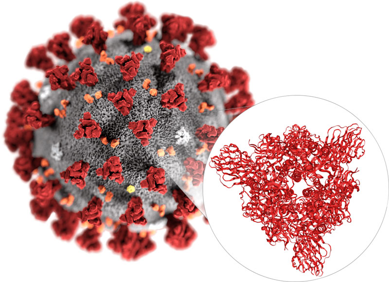 Atomic-Scale 3D Map of Coronavirus (2019-nCoV)