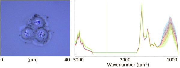 Single mammalian cell analysis