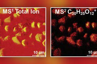 TOF-SIMS Tandem MS Imaging