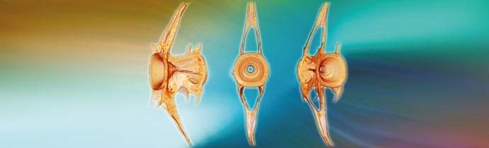 Zabrafish Imaging with Micro-CT